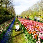 Du lịch Hà Lan mùa hoa tulip đẹp như cổ tích: tips tiết kiệm mùa cao điểm